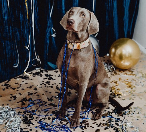 A Dog's New Year Resolution