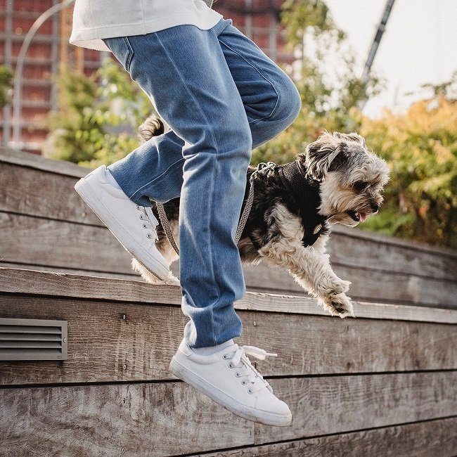 5 Fun Ways to Exercise With Your Dog (So You Can Eat More Treats!)