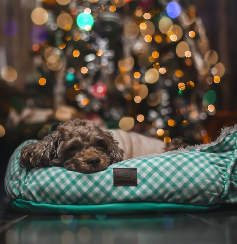 5 Ways To Have The Very Best Holiday With Your Dog