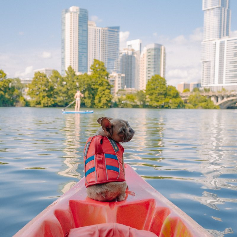 10 Adventures For Warm Weather Bonding With Your Dog