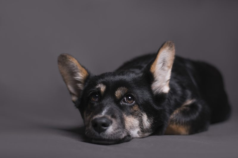 How to Help your Nervous and Fearful Dog